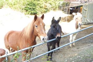 馬森牧場の馬たち