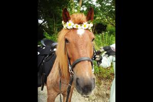 花飾りを付けた馬
