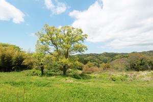 馬森牧場の竹林の画像
