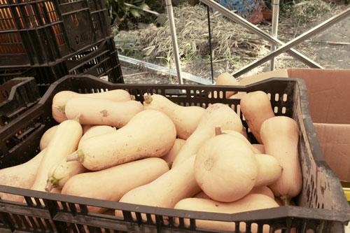 バターナッツの画像