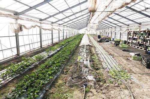 農業用ハウスの画像