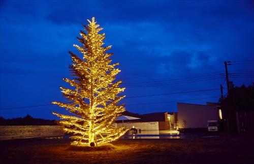 全長8mのクリスマスツリーの画像