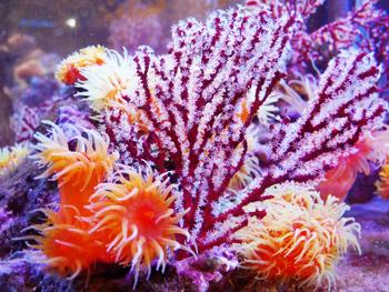 サンゴの画像