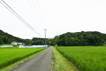 店舗周辺の田園