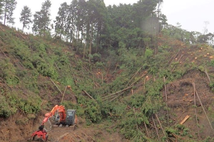 急斜面の木を伐採する様子