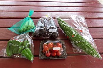 育てた野菜を出荷