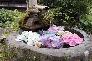 アジサイを浮かべた花手水