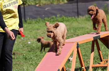 台で遊ぶ犬たち