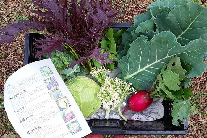 発送される野菜たち